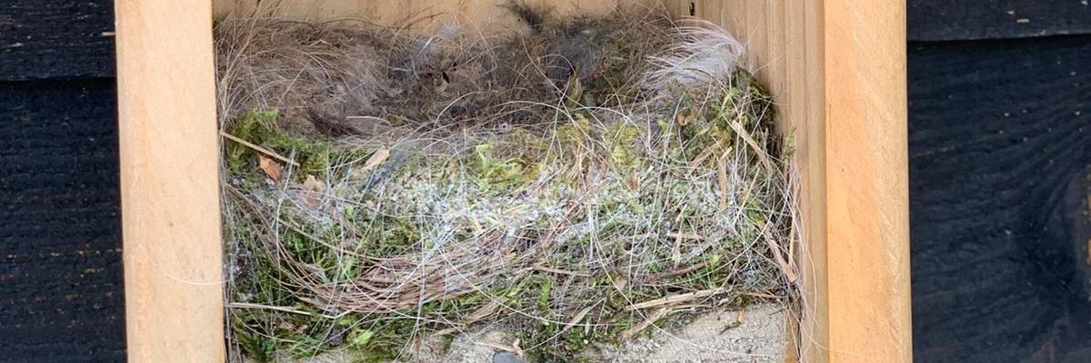Nest in mezenkast
